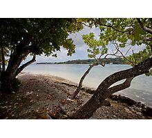 Seashore and trees, Vanuatu, South Pacific Ocean Photographic Print