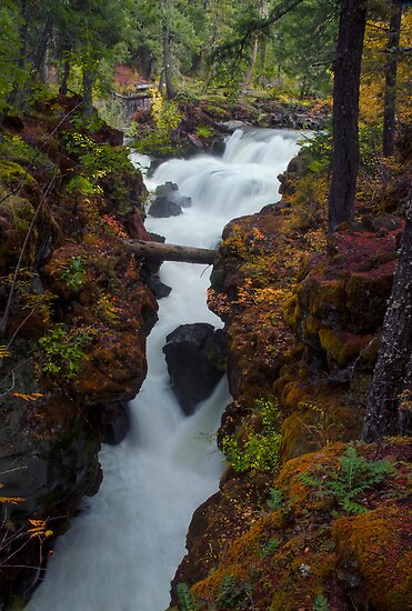 Rogue River Gorge #2 by Jeannie Peters