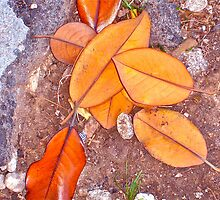 Fall Leaves by Christine Chase Cooper