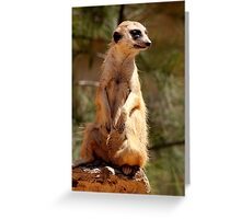 At the Zoo - Meerkat Lookout Greeting Card