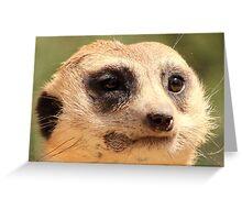 At the Zoo - Meerkat Close Up Greeting Card