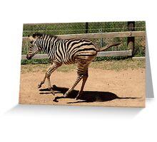 At the Zoo - Zebra Skip Greeting Card