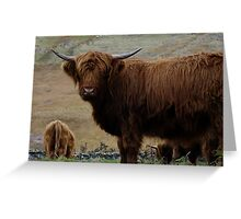 hairy cow, cairndow Greeting Card