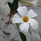 White On White by Fara