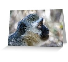 Vervet Profile Greeting Card