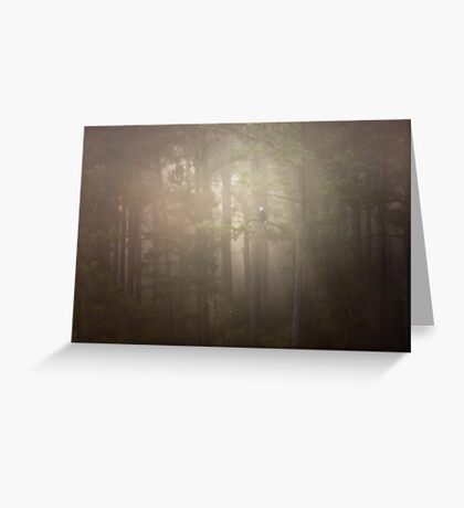 Bald Eagle In The Foggy Mist, Jordan Lake, NC Greeting Card
