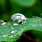 Droplets on a Leaf by Roger Sampson