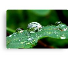 Droplets on a Leaf Canvas Print