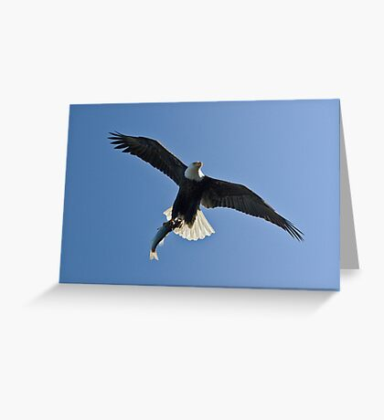 Delivery! Bald Eagle, Jordan Lake, NC Greeting Card