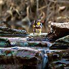 Cross the streams by Dan Phelps