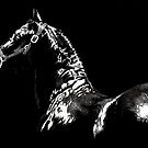Friesian on Scratchboard by Andrea Michael