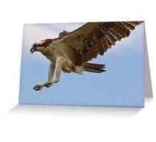 Landing, Adult Osprey, Jordan Lake, NC Greeting Card