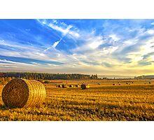 Halcyon Harvest Days Photographic Print