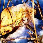 Lost Autumn by Tonya Morton