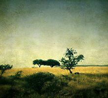 Campos de S. Miguel de Allende by AnNina-