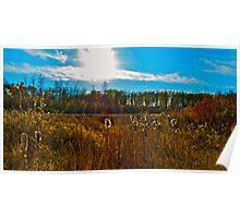 Hasse Lake in October, Alberta Canada  Poster