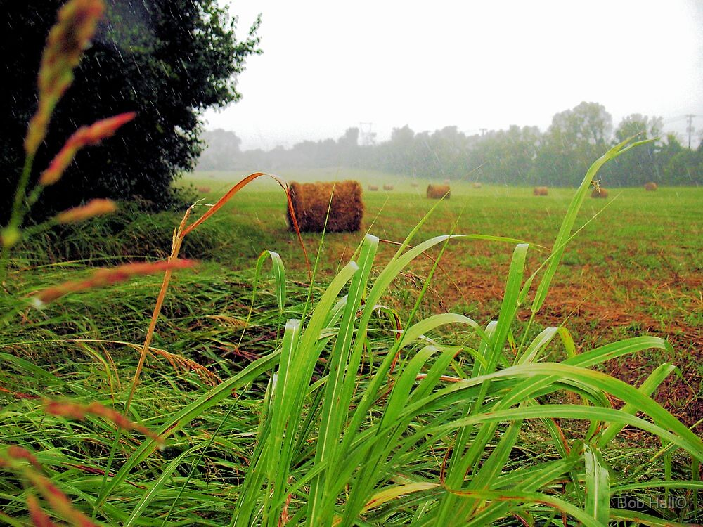 Tall Grass and Hay Bales by © Bob Hall