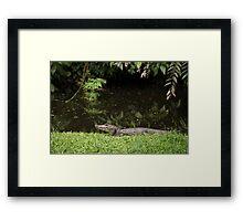 Aligator Framed Print