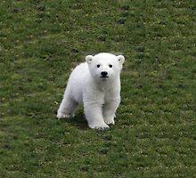 Cute Polar Bear by georgiasf