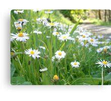 Wildflower Walk Canvas Print