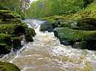 The Strid  by Colin  Williams Photography
