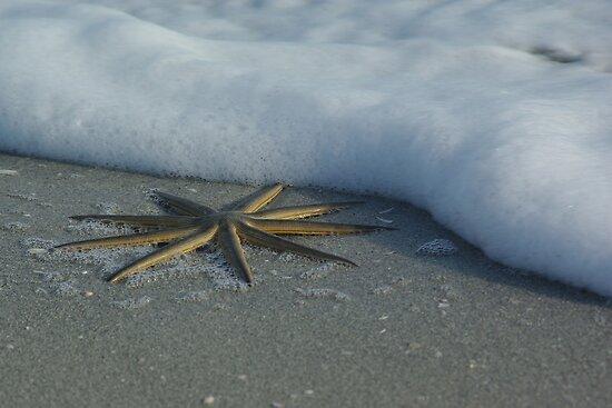 Starfish by Foam II by Karen Checca