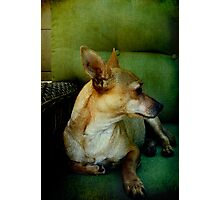 Goldie - A love story Photographic Print
