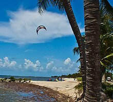 Palm Shore (right) by Rob Atkinson