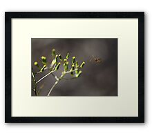 Unidentified Flying Insect Framed Print