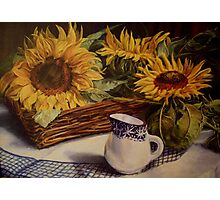 Tony's sunflowers Photographic Print