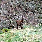 Bambi by dawnandchris