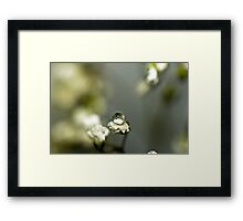 Dew Drop Framed Print