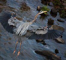 Heron Landing, Jordan Lake, NC  by Denise Worden