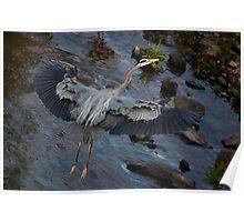 Heron Landing, Jordan Lake, NC  Poster