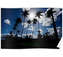 Silhouetted palm trees, Vanuatu, South Pacific Ocean Poster