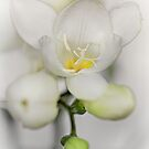 Adorable Freesia... by Bob Daalder