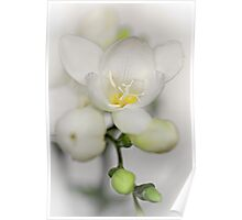 Adorable Freesia... Poster