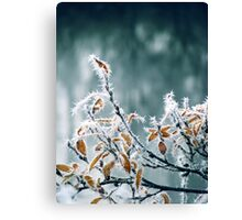 28.10.2012: Frost, Branches, Colours Canvas Print