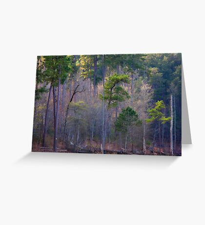 Trees And Light, Jordan Lake, NC Greeting Card