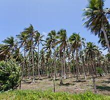 Palm trees, Vanuatu, South Pacific Ocean by Sharpeyeimages