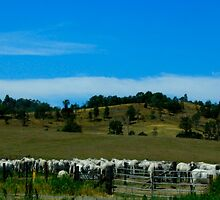 Milking time at Kenilworth by myraj