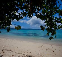 Seashore, Vanuatu, South Pacific Ocean by Sharpeyeimages