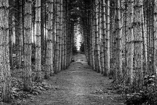 The Quiet Walk by John Dunbar