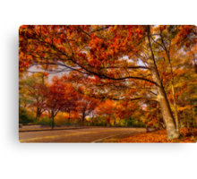 Fall Road,Chestnut Hill, Massachusetts Canvas Print