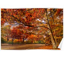 Fall Road,Chestnut Hill, Massachusetts Poster