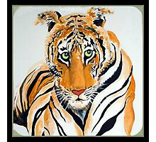 Earn your Stripes Photographic Print