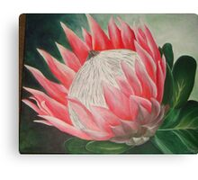 King Protea - South Africa Canvas Print