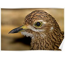 Thick Knee Poster