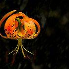 Halloween's Brooding Flower by Marilyn Cornwell