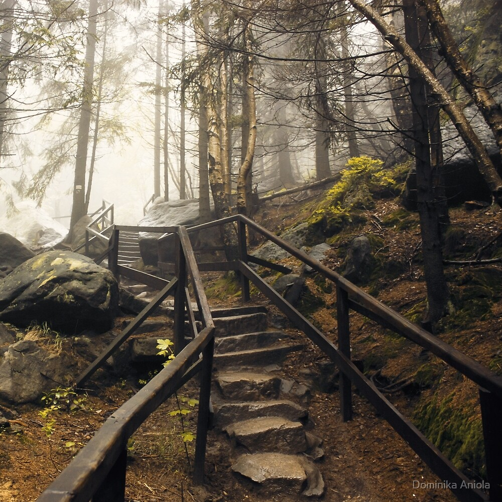 Into the light by Dominika Aniola